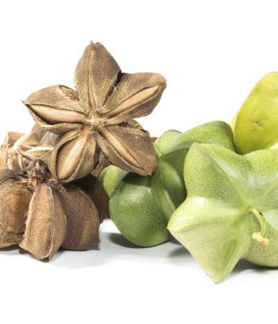 Najcenniejszy naświecie olejek dla twojejskóry – znasz go?