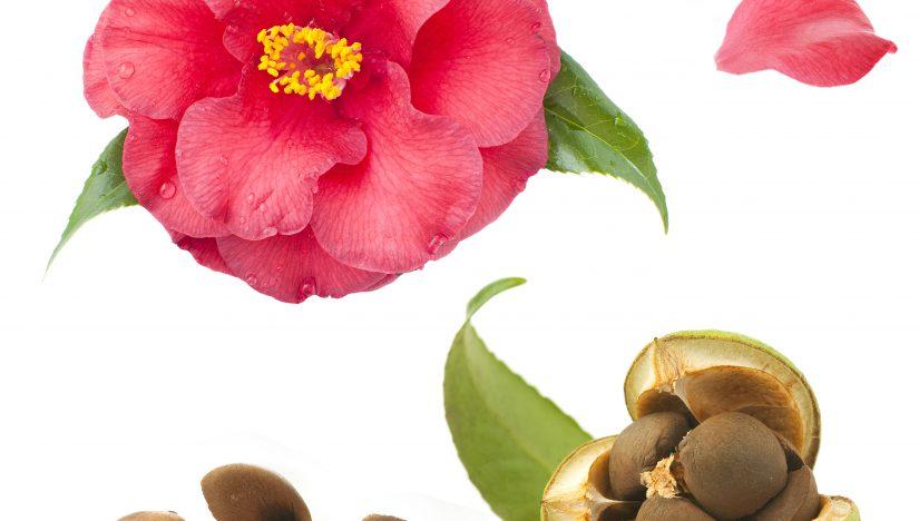 Egzotyka wpielęgnacji – tych niecodziennych olejków szukaj wkremach